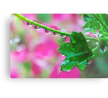 Pink Geranium Reflections After the Rain Canvas Print
