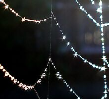 Jewel Drops on Web by Cliff Vestergaard