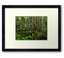 Mountain Ash and Ferns Framed Print