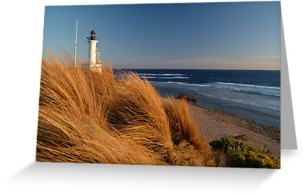 Wind Blown Grasses, Pt Lonsdale Lighthouse by Joe Mortelliti