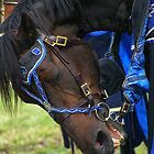 A knights horse by Andrew Wilson