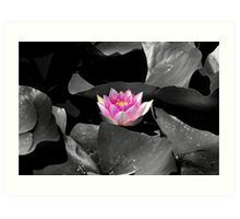 Sweet Lily Art Print
