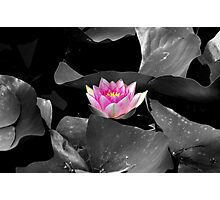 Sweet Lily Photographic Print