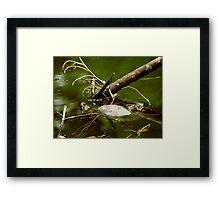 Turtles.. Framed Print