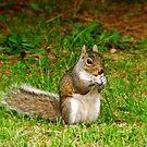 Squirrel... by Tricia Stucenski