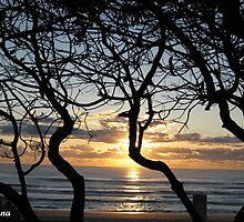 Through the branches... Sunrise Surfers Paradise by Rohana