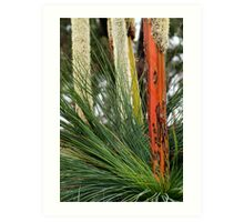 Grass Trees, Brisabane Ranges Art Print