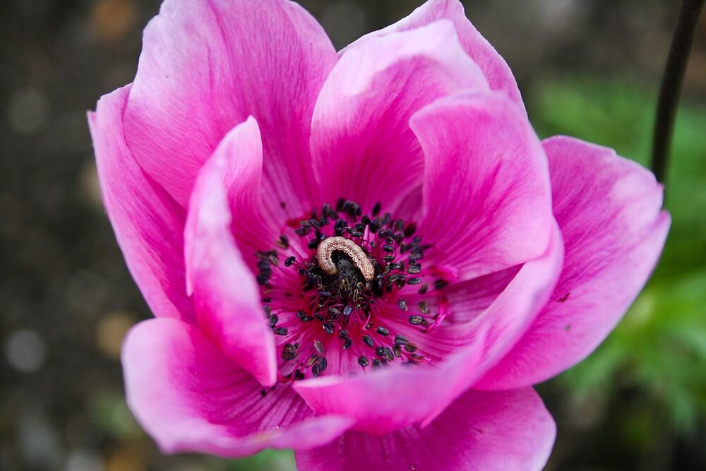 nans flower by TimmyF