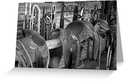 The Stock Saddles by Damian