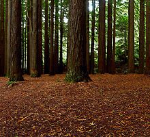 Aire Redwoods by ShaneBooth