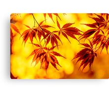 Japanese maple set Canvas Print
