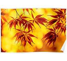 Japanese maple set Poster
