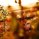 Late Autumn Sun by JenStocks