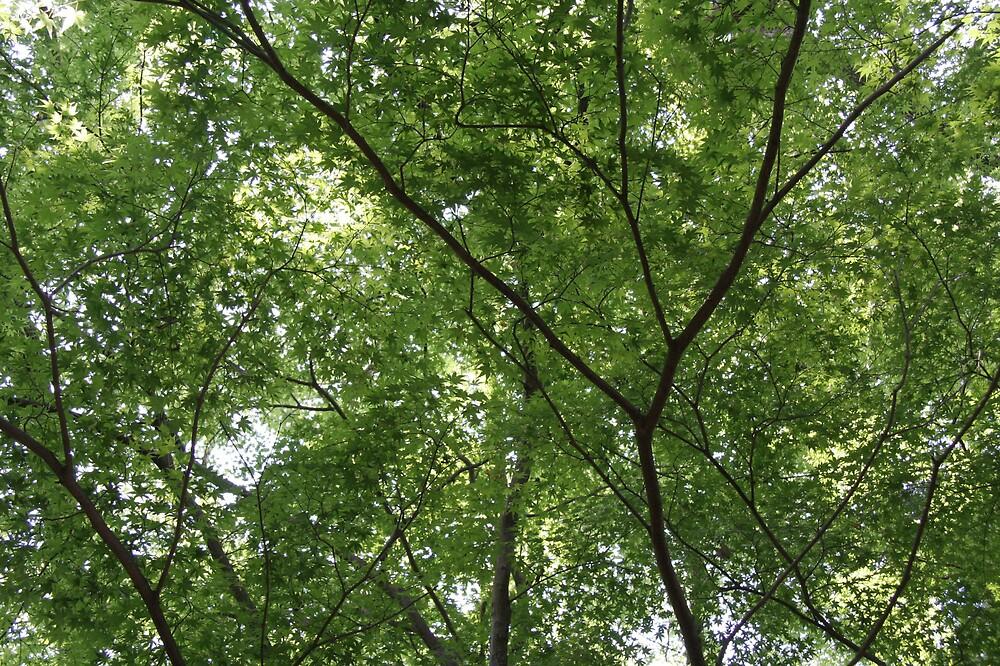 Tree Branches by hiratadigital