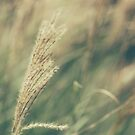 Weeds in the wind ..  by karenanderson
