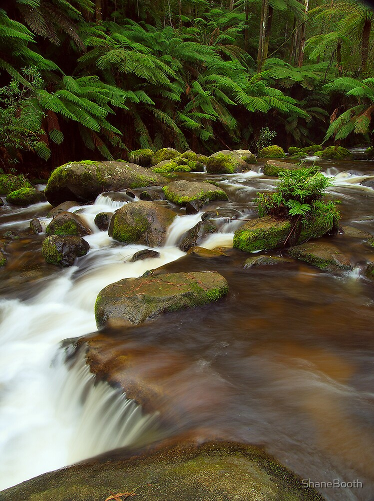 Toorongo River by ShaneBooth