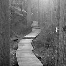 Wetland Trail B&W by elasita