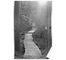 Wetland Trail B&W Poster