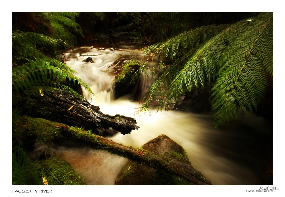 Taggerty river, Marysville State Forest by Aaron .