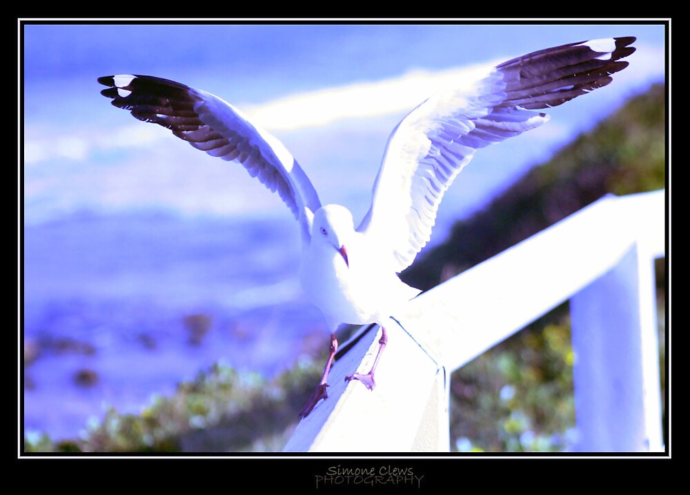 Seagull 1 by Simone C
