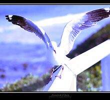 Seagull 1 by Simone C
