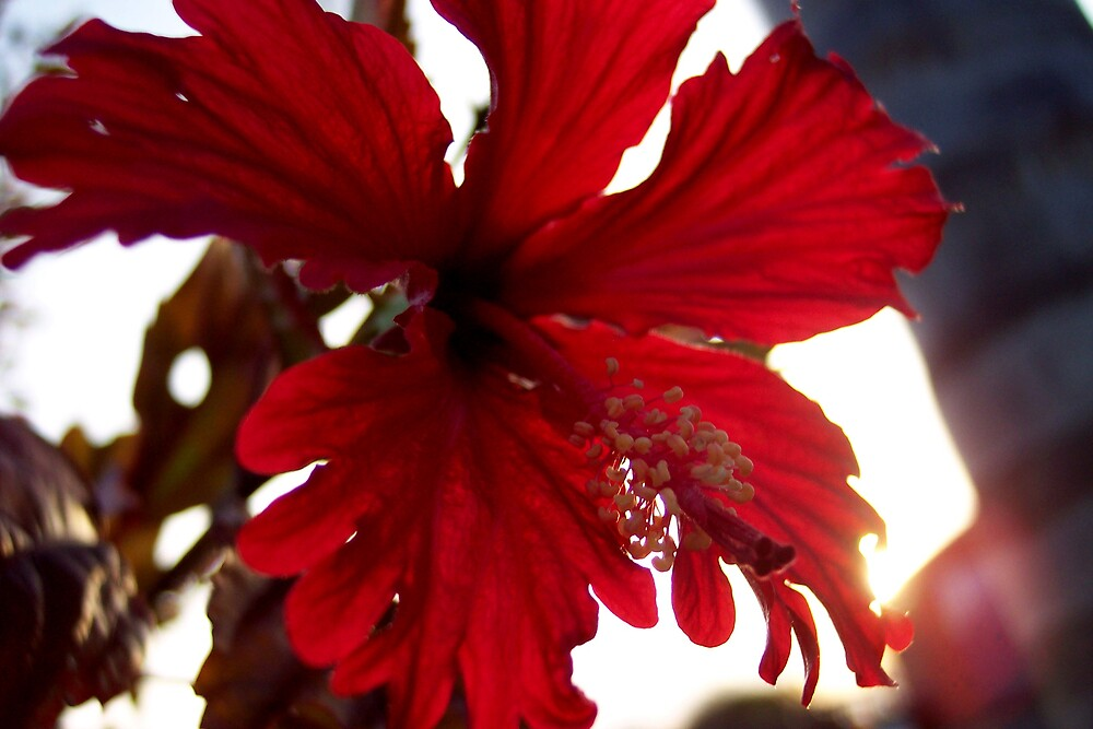 morning flower by darkknight