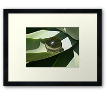 Smokey quartz sphere nested Framed Print