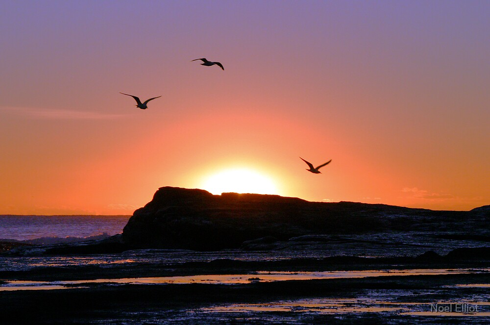 Seagull Sunrise #1 by Noel Elliot