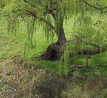 Willow Tree Now Deceased  by Denny