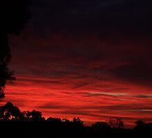 Rose Sunset by Denny