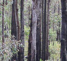 Forest by Jasonlittle