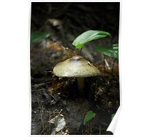 Mushroom in the Shade Poster