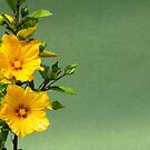 Twin Yellow Flowers - Card by DPalmer