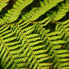 Ferns by Emma Newman