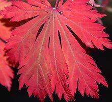 Scarlet Red Autumn Leaf by Emma Newman