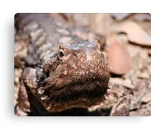 """How bout a Kiss"" Bearded Dragon  Canvas Print"