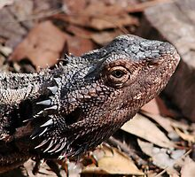 """""""Whats Up"""" Bearded Dragon  by diddle"""