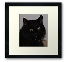 Affy, Sir Fur Framed Print