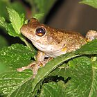 mint frog by melissa sipek