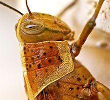 Cricket Close Up by Penny Smith