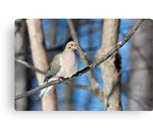 Mourning Dove in the Woods Canvas Print