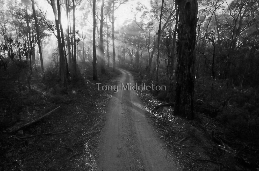 sunbeams by Tony Middleton