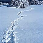 Footprints in Snow by John Barratt