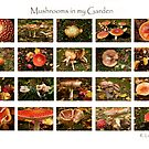 Mushrooms in my Garden by Robyn Lakeman