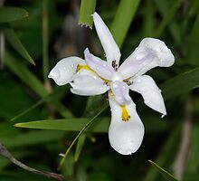 Flower-2 by blksub