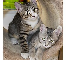 Tabby Kitten Cuties Photographic Print
