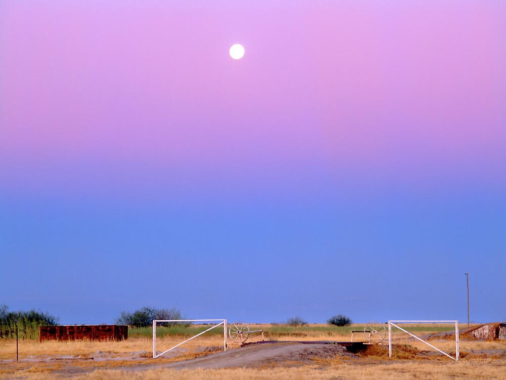 Cattle country,Gulf country.QLD. by matthew maguire