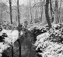Winter in the Tiergarten, Berlin by Rodderrick Sota
