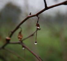 Tear Drop by Ryan Golla