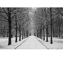 Winter's Path Photographic Print